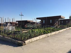 Photo: 31 Mayıs 2015 itibariyle hobi bahçem #1