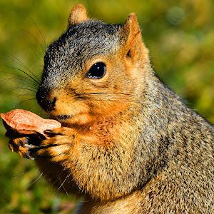 squirrel 020516 A.jpg