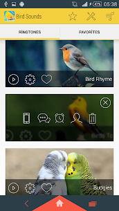 Bird Sounds Ringtones 1.12 Mod APK Download 2