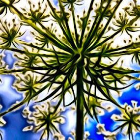 Embossed lace by Pamela Hammer - Digital Art Abstract ( abstract, digital art, queen anne lace )