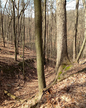 Photo: View from Hickory Hills Trail near the DNR Headquarters