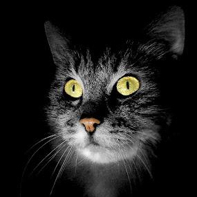 Dark room by Jurijs Ratanins - Animals - Cats Portraits ( mobilography, cat )