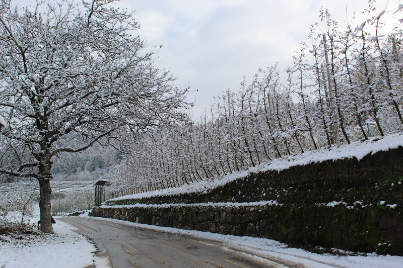 Strada invernale di Betty_95