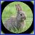 Rabbit Hunter file APK Free for PC, smart TV Download