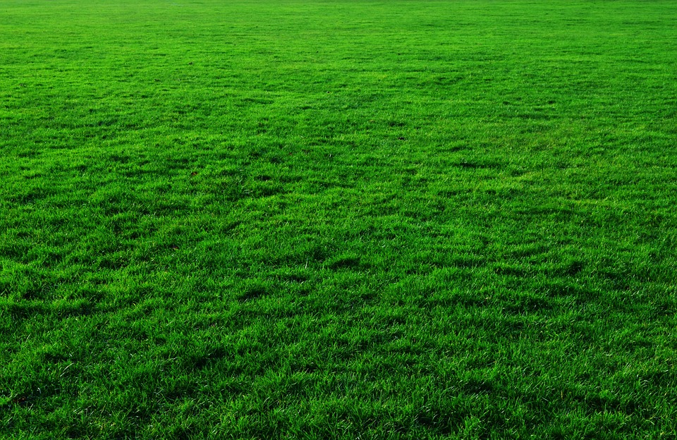Free photo: Background, Green, Grass, Lawn - Free Image on Pixabay ...