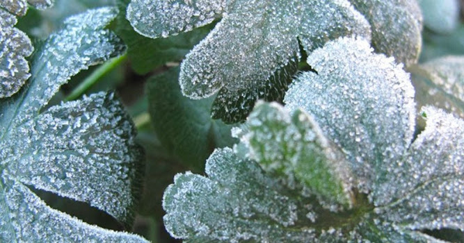 Winter Is Coming. Expert Gardener Shares Must-Know Tips To Get Your Garden Ready