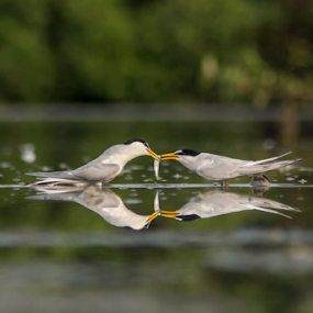 I Love U by Rusman Budi Prasetyo - Animals Birds (  )