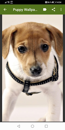 Puppies Wallpapers Free for Android