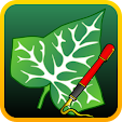 Ivy Draw: V.. file APK for Gaming PC/PS3/PS4 Smart TV