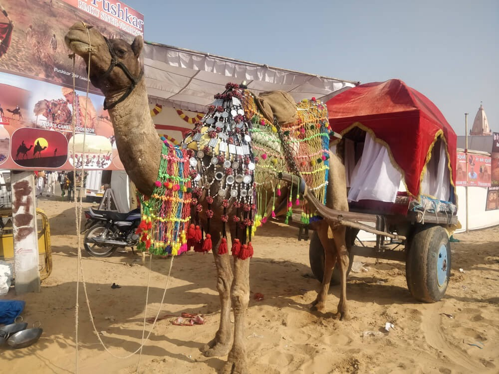 decorated+camel+cart+pushkar+ka+mela+rajasthan