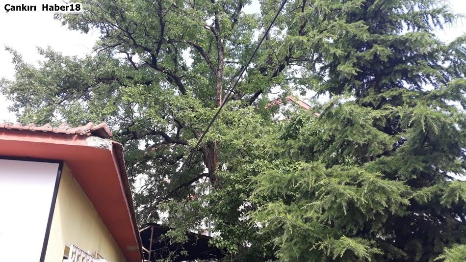 Çankırı Şehir Merkezi,Çankırı Orman İşletme,Çankırı Yıldırım,