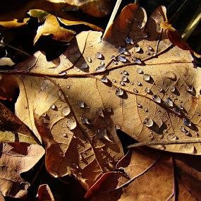 Autumn by Karel Šula - Uncategorized All Uncategorized ( autumn )