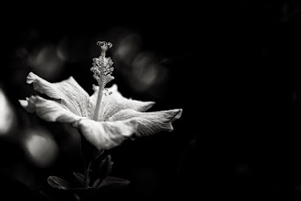 Photo: goodnight  #bwphotography  #monochrome  #flowers  #flowerphotography