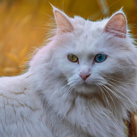 by Kennet Brandt - Animals - Cats Portraits