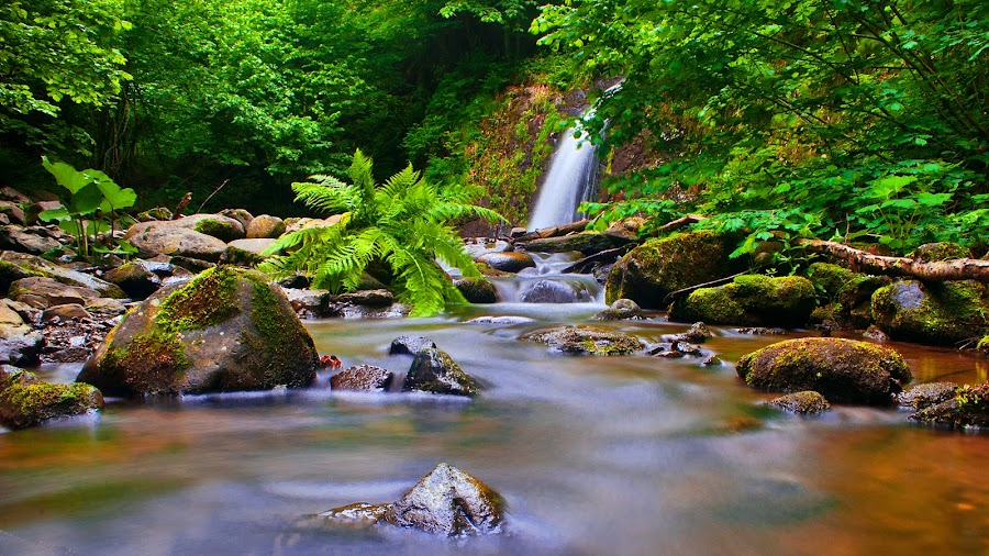 Nature by Tamas Valentin - Landscapes Waterscapes ( water, nature, waterfall, forest, landscape )