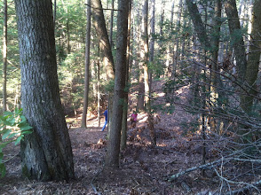 Photo: Into the woods! From the midget camp area.