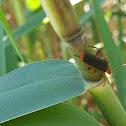 Beetle (???)