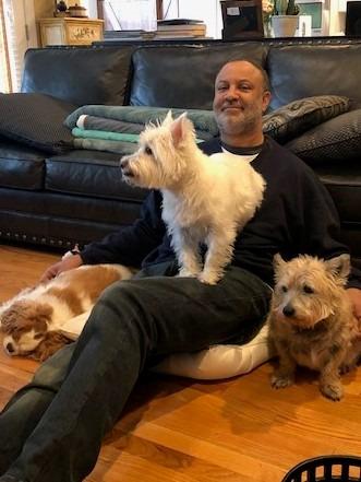pet sitting three dogs