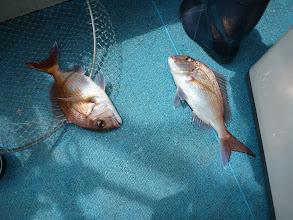 Photo: 真鯛のダブル!