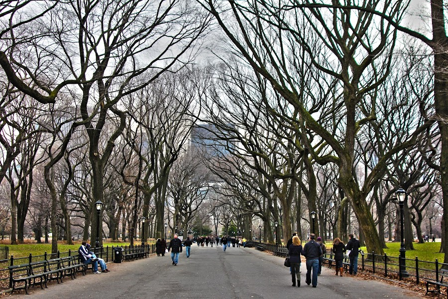 Central Park - NYC  by John McGraw - City,  Street & Park  City Parks ( park, nyc, central park )