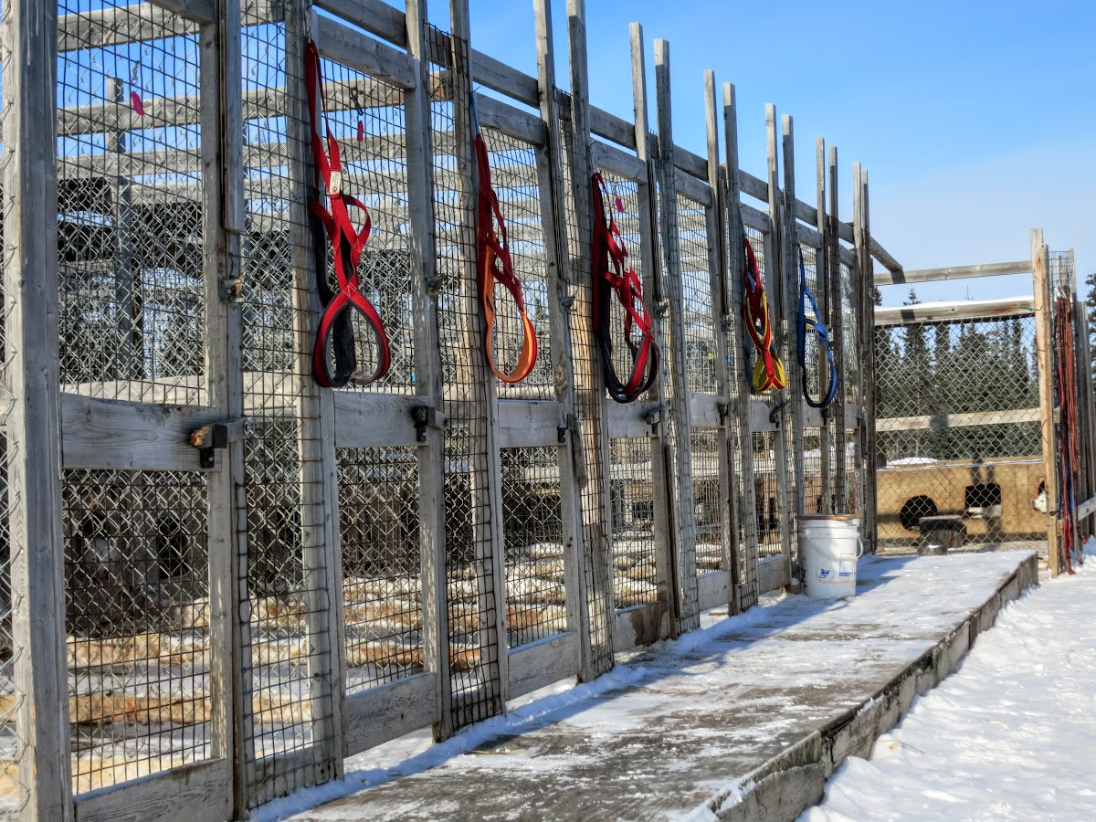 Dogs' harnesses at the kennel
