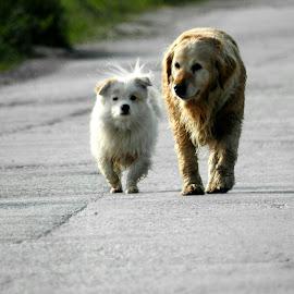 Two friends by Aleksandra Radojičić - Animals - Dogs Running ( dogs )