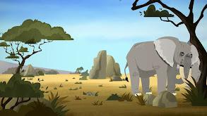Elephant Brains! thumbnail