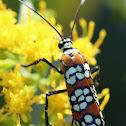 ?day moth