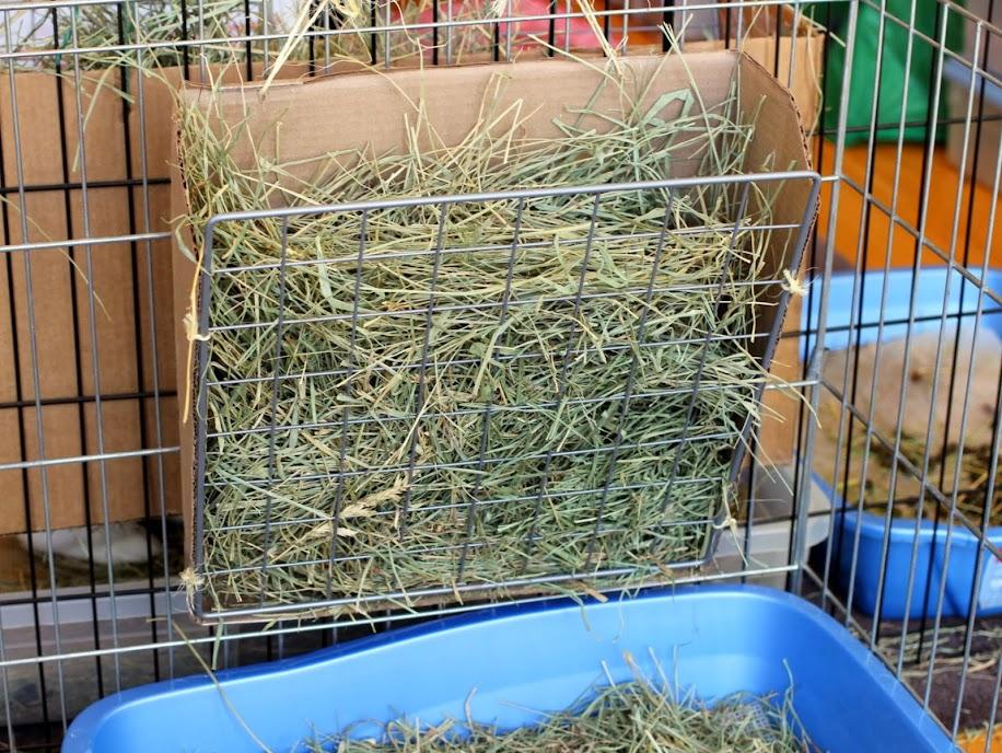 diy hay rack coding with bunnies