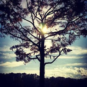 Greenfield Lake, Wilmington, NC 2 by Paul Stanley - Instagram & Mobile iPhone (  )