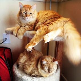Happy Birthday to my two sassy kids, Armani & Felix!  #cat by Tyler Landgraf - Instagram & Mobile Instagram