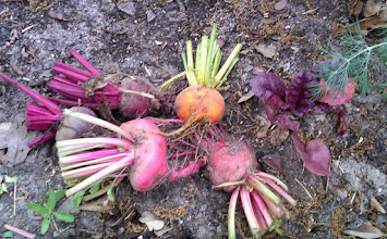 Photo: Beets- by Sue, 4/2/11