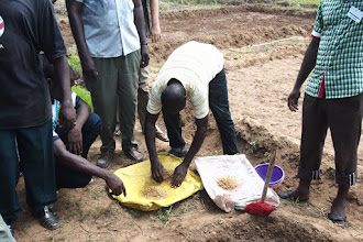 Photo: Preparing seed at a May 2013 West Africa SRI Training of Trainers held in partnership with the United States Peace Corps in Oueme, Benin. [Photo by Devon Jenkins, Benin, 2013]