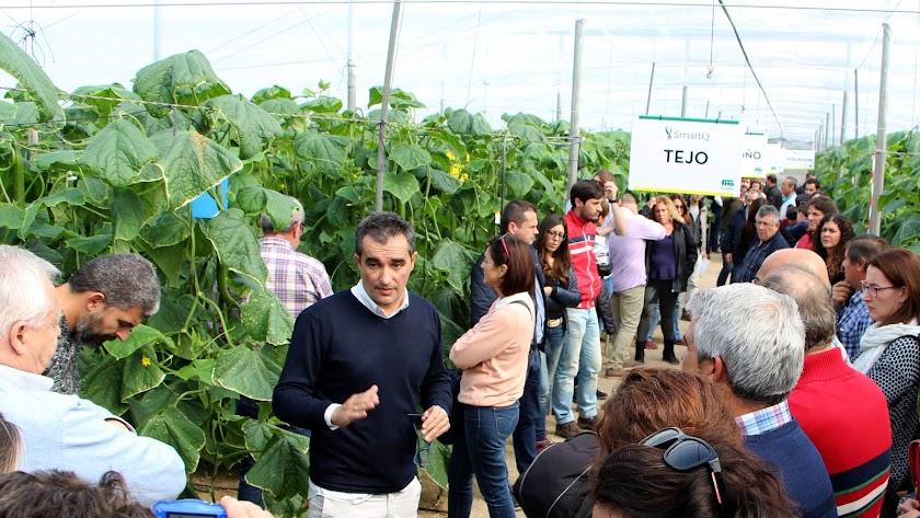 El pepino holandés de Fitó: más resistencias y salud de la planta manteniendo la calidad del producto