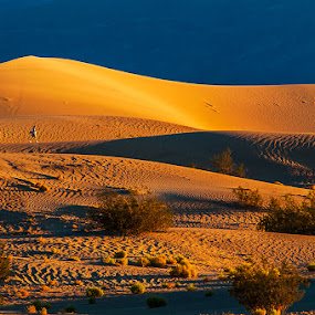 Sand Dune Moment by Qing Zhu - Landscapes Deserts ( hill, sand, time, walking, one person, sand dune, leasure, gold, yellow, landscape, golden light )