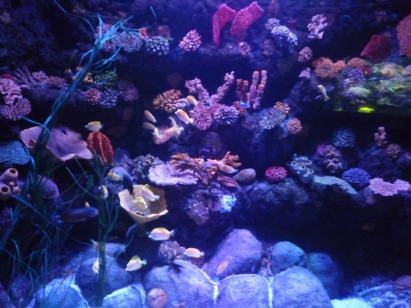 Barriera corallina melanzanica di alansa