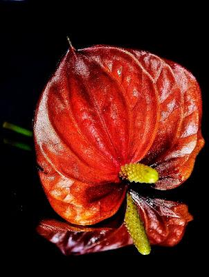 Flower di jappone