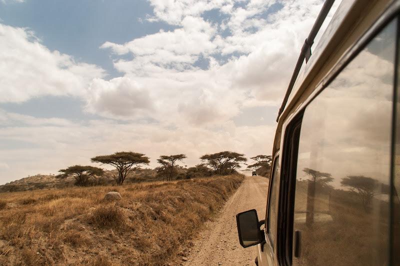 Correndo nel Serengeti di Cosimo Ignesti