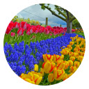 Garden New Tab Page HD Wallpapers Themes Icon