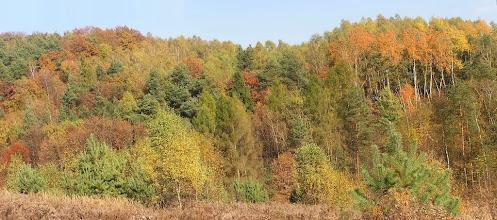 Photo: DA190375 Dolina Kobylanska - jesien