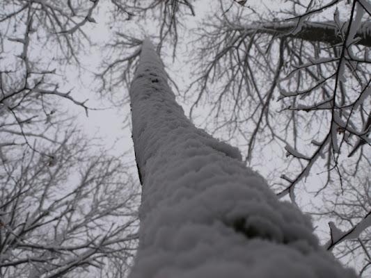 La bellezza degli alberi innevati. di Ilaria Torregiani