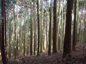 植林の美林