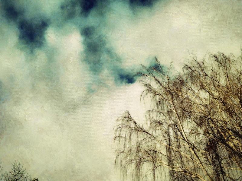 Photo: Painted Tree