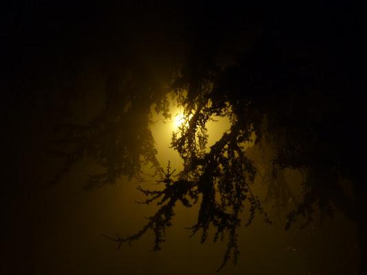 Oltre la nebbia di @7516cc