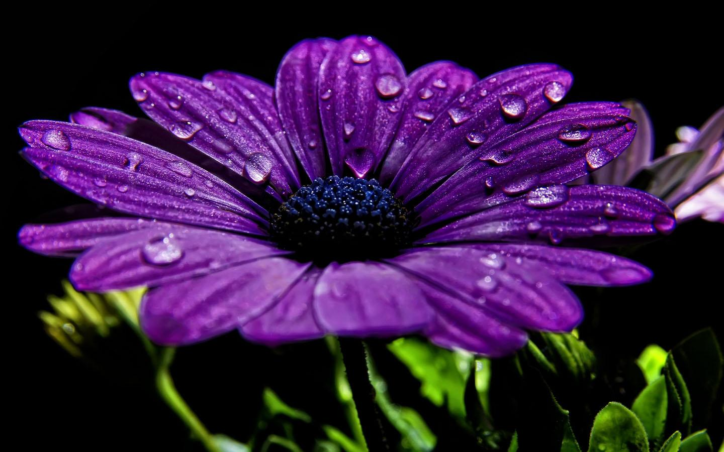 Purple flower wallpaper android apps on google play purple flower wallpaper screenshot voltagebd Gallery