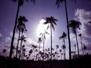 Photo: Palmworld