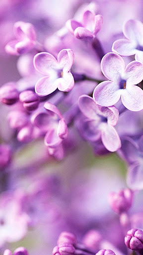 Flowers Lock - Slide To Unlock