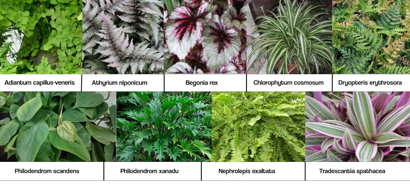 Especies instaladas en el jardín vertical