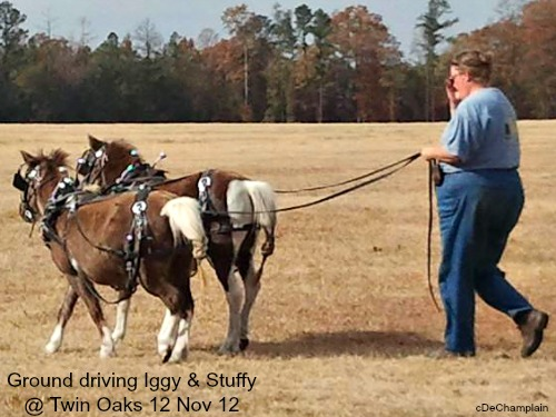 ground driving Iggy & Stuffy @ Twin Oaks - 2012