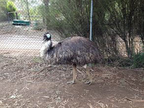 Photo: Day 6: Emu
